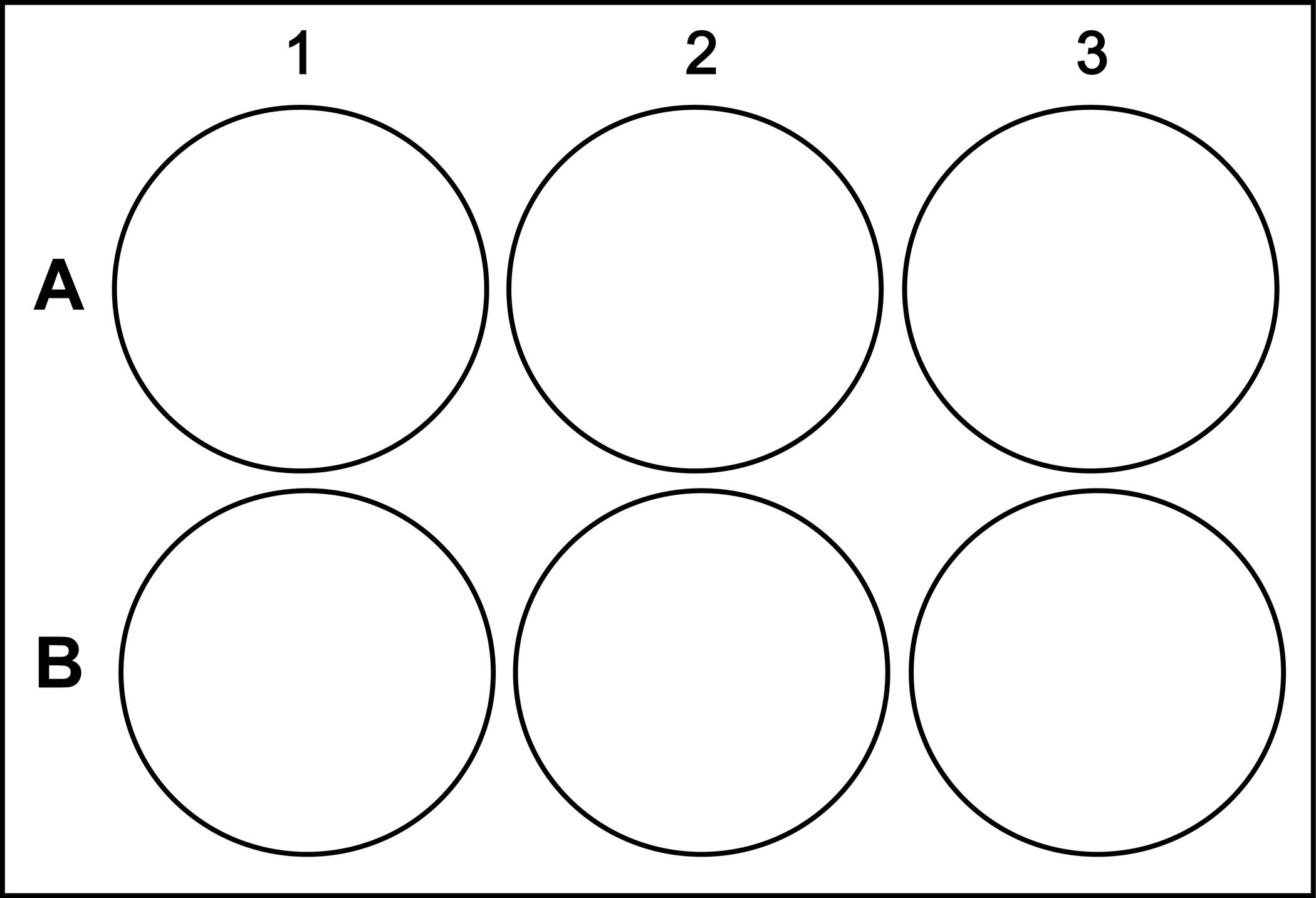 Шаблон круг картинки